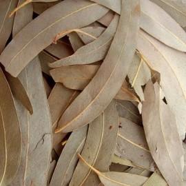 Eucalyptus Bio (feuilles) - Nature et Progrès