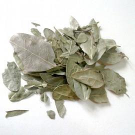 Boldo Bio (feuilles) - Nature et Progrès