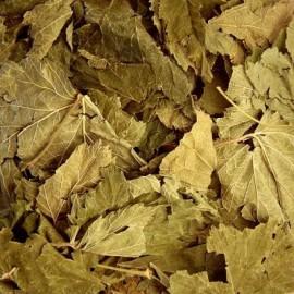 Cassis Bio (feuilles) - Nature et Progrès