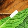 D'Lice - Tabac Menthe - E-Liquide - 10 ml