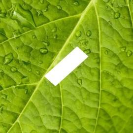 D'Lice - Menthe Verte - E-Liquide - 10 ml