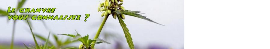 En savoir plus sur le chanvre alimentaire bio