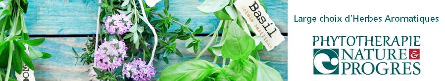 En savoir plus sur les herbes aromatiques bio