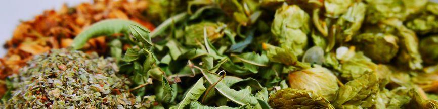 herbes aromatiques et medicinales